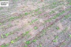 12-Regenerative-Agriculture-20180302_194857