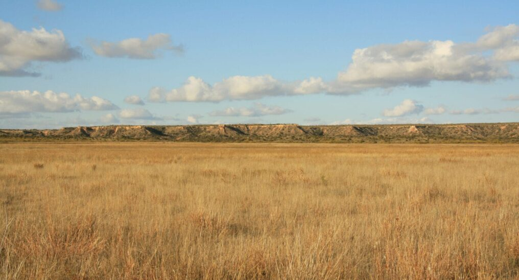 Shortgrass-prairie-picture-1536x1025-min (1)